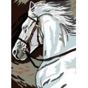 Koń siwy
