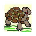 Wesoły żółw