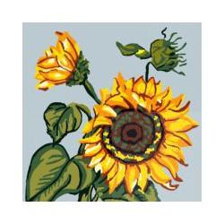 Słonecznik - kwiaty